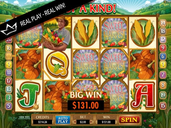 Sweet Harvest Online Slot Big Win